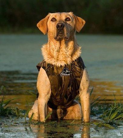 Dokken's Neopreen hondenvest x-treme