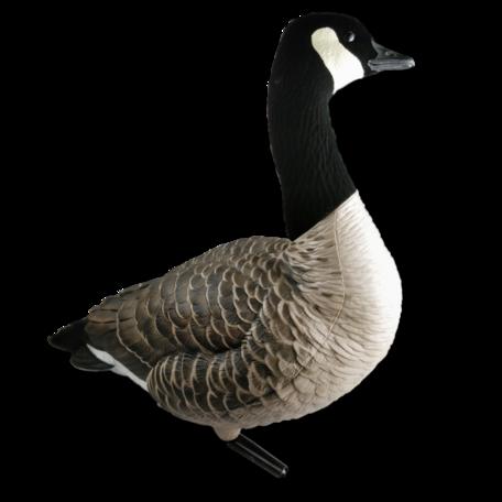 Avian-X Canadese gans lokkerset (6st.)
