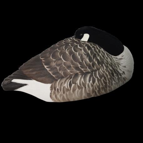 Avian-X Canadese gans rustend (6st.)