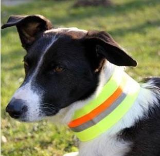 veiligheidsband voor honden